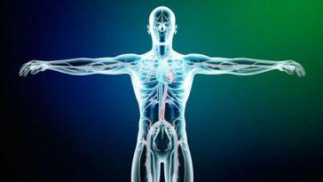 O conjunto de todos os sistemas constitui o organismo que funcionando em conjunto e harmonicamente mantém a sobrevivência do corpo humano (Foto: Divulgação)