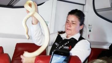 Comissária precisou recolher o animal (Foto: Anna McConnaughy/ Divulgação)