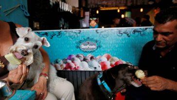Animais se refrescam com sorvetes na Cidade do México (Foto: Reprodução/ Facebook)
