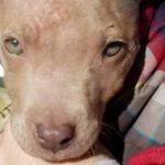 feedclub cãozinho adotado