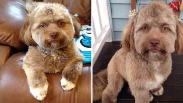 feedclub cachorro com rosto de humano fb