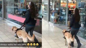 feedclub cão guia pet shop