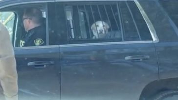 feedclub cão preso
