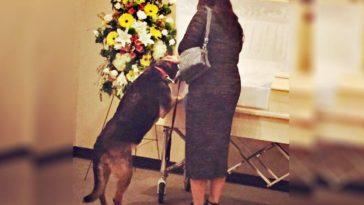 feedclub cadela funeral