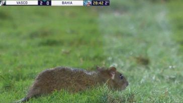 feedclub rato vasco bahia são januário
