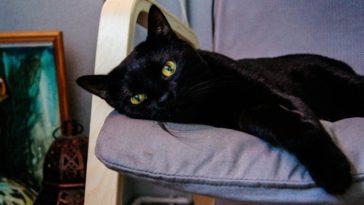 feedclub gato preto halloween