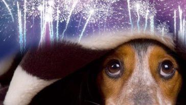 feedclub animais fogos de artificio