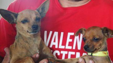 feedclub animais resgatados brumadinho