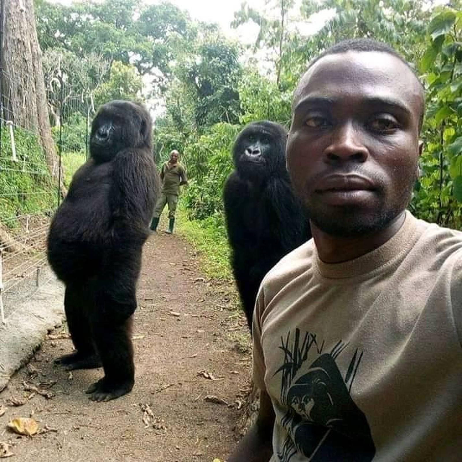 feedclub gorilas selfie 2