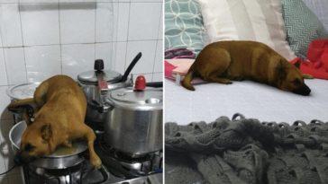 sasha dog filtro de cachorro instagram