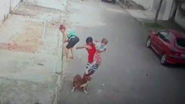 ataque de pit bull